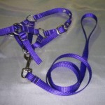 Alpaca Halter and Lead
